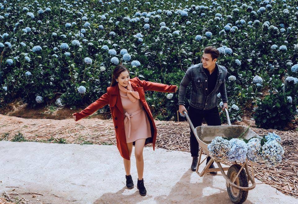 Ảnh chụp ngoại cảnh tại vườn hoa cẩm tú cầu
